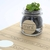 """2"""" brown kraft circle label used to label small glass indoor plant jars"""
