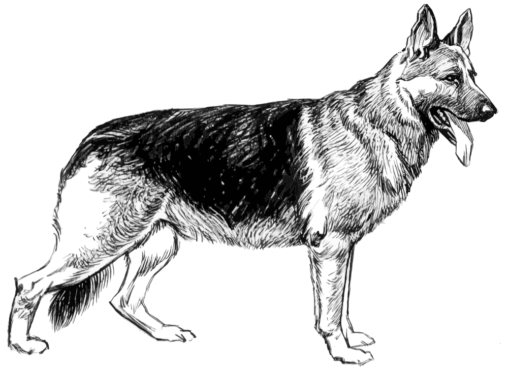 Onlinelabels Clip Art German Shepherd Sketch