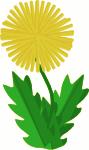 flower - dandelion