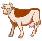 cow - coloured