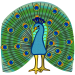 peacock - coloured