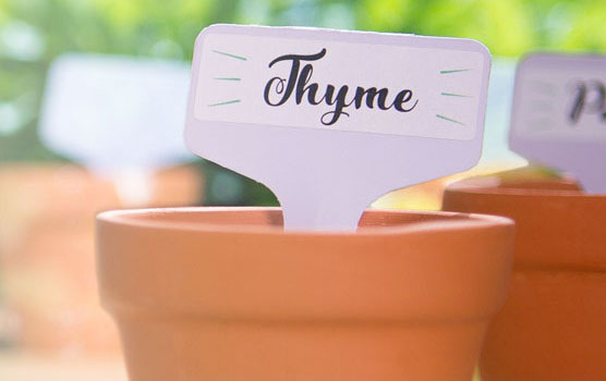 Garden / plant labels in use